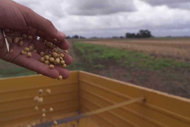 """Por el """"Efecto Argentina"""", debido a la sequía en el país, en Chicago la soja subió US$2,02"""
