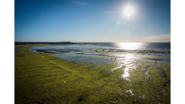 Pescadores artesanales de Madryn. Pescan en el golfo San José, en la Península Valdes.. Foto: LA NACION / Julian Bongiovanni