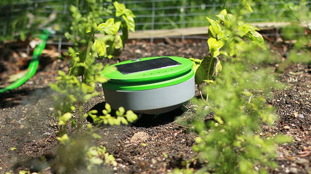 Tertill es un robot que detecta las malas hierbas y las quita del jardin