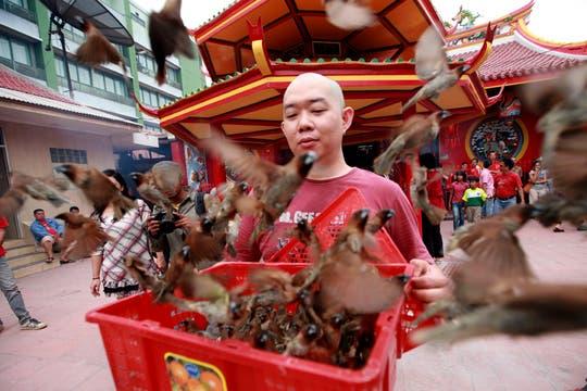 Un hombre libera pájaros tras rezar en un templo en Yakarta, Indonesia. Foto: EFE