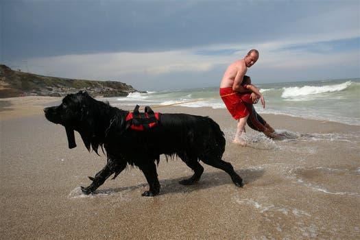 SALVATAJE. Un solo animal es capaz de arrastrar a seis personas desde mar abierto hasta la playa. Foto: Mauro Rizzi