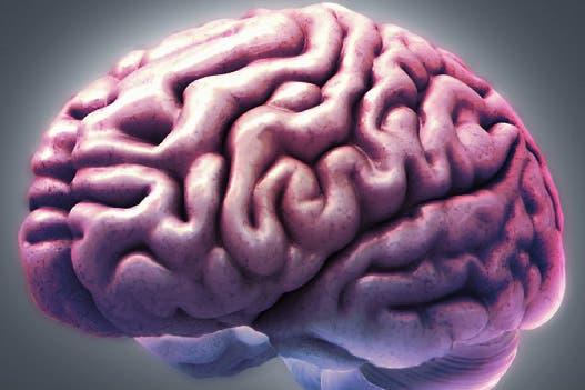 Identifican parte del cerebro que nos hace humanos - LA NACION