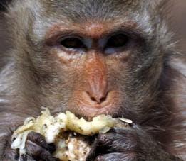 Su olor, en la naturaleza, sirve un propósito: atraer a los animales para que se la coman y dispersen sus semillas.