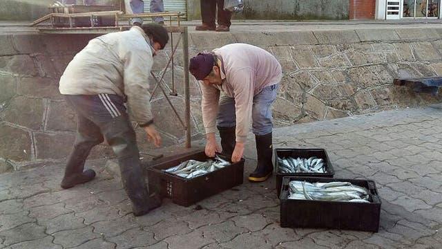 """Desaparecen las lanchas pesqueras del puerto de Mar del Plata, las tradicionales """"lanchas amarillas"""" están al borde de la extinción. Foto: LA NACION / Diego Yañez"""