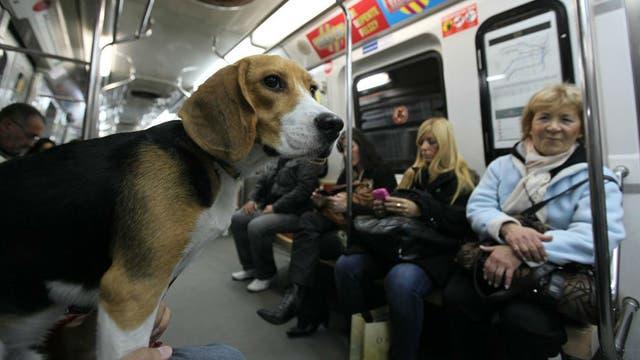 Los fines de semana los perros y gatos pueden viajar en subte