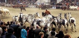 En la inauguración oficial de la Exposición Rural, jinetes y tropillas demostraron su gracia natural