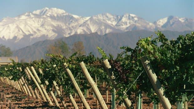 Preocupación en la cadena vitivinícola