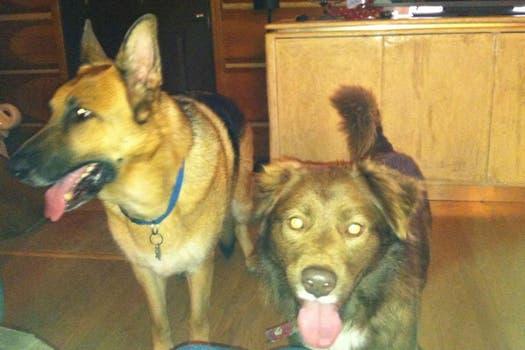 Chili, junto a uno de sus nuevos amigos, Klaus. Foto: facebook.com/kaylan.oconnor/