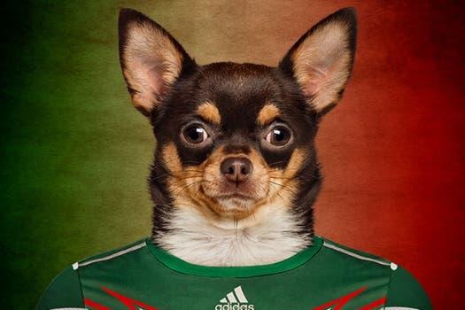 Chihuahua, de México.