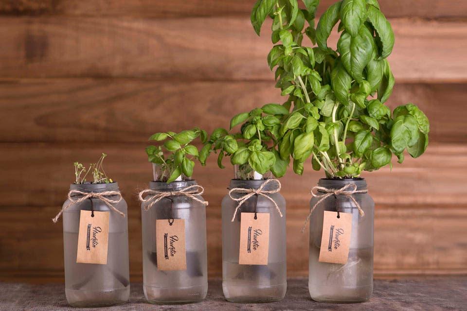 Kit de cultivo de aromáticas, Huertín, $279. Foto: OHLALÁ!
