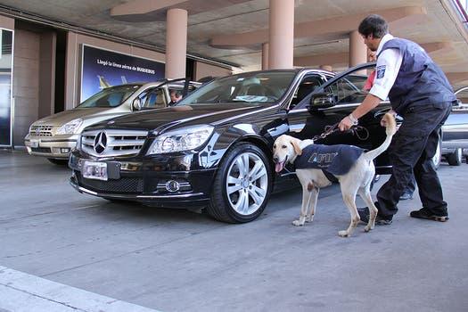 Los animales son entrenados para detectar el olor a tinta de los billetes. Foto: LA NACION / Darío del Olmo