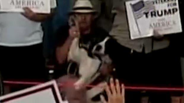 El hombre levantando la mano a su perro