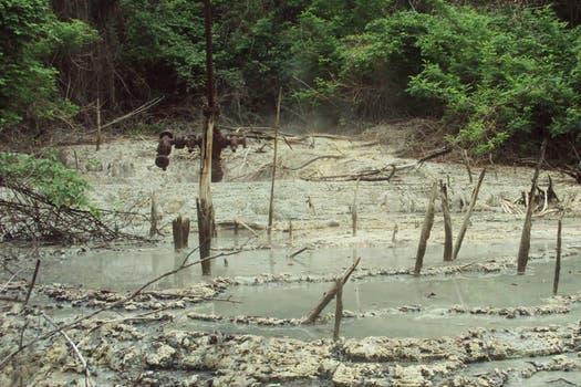 Una zona protegida, pero devastada. Foto: Amigos del Parque Nacional Calilegua