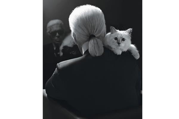 Glamorosa, estrella indiscutida de Twitter. Choupette, así se llama la gata de Karl Lagerfeld. Considerada una más dentro del seno familiar del diseñador de Chanel. Tal es así, que hasta tiene su propio lugar en la mesa de la mansión parisina. Foto: Vía pleasurephotoroom.wordpress.com