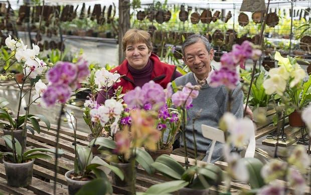 Orquideas hosokawa for Viveros en escobar