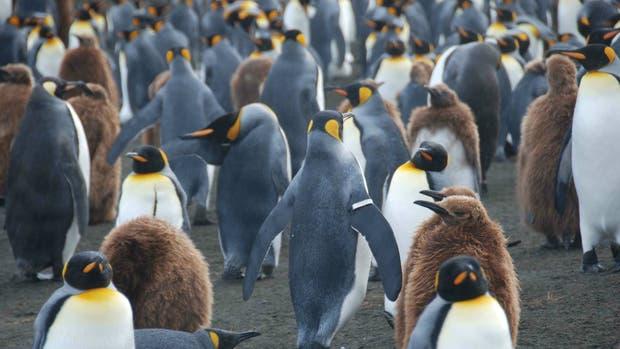 El 25 de abril se celebra el Día Mundial del Pingüino