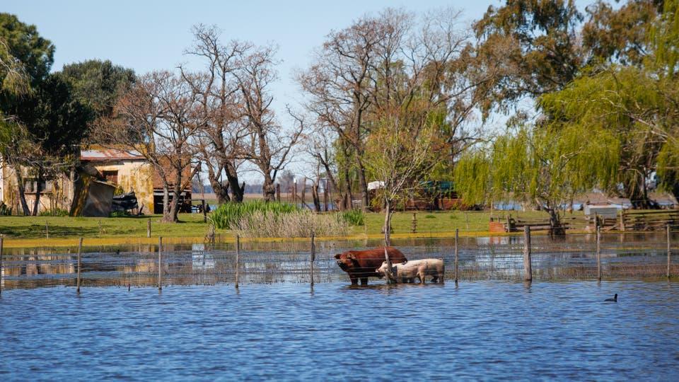 Las inundaciones en la provincia de Buenos Aires. Foto: LA NACION / Mauro V. Rizzi