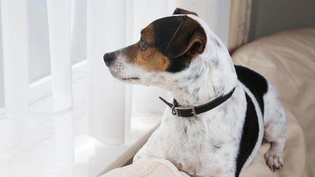 Las mascotas la pasan mejor con el House Sitting ya que no se mueven de su hábitat natural