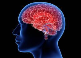 El cerebro actúa como el gran procesador de lo que ocurre en nuestro organismo.