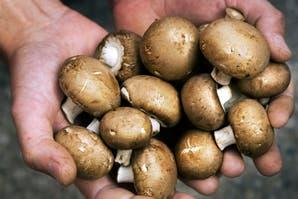 Hongos frescos o secos: cómo usarlos para cocinar