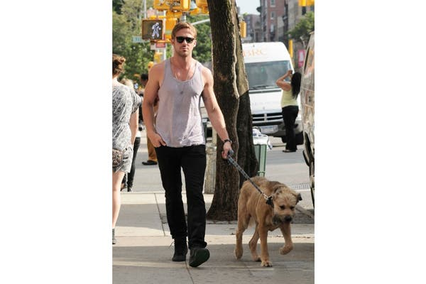 Ryan Gosling no se separa de su perro, George. No sólo lo pasea por las calles de New York, también lo llevó a un programa de tele para mostrar su nuevo corte de pelo. Foto: Vía homeatwork.tumblr.com