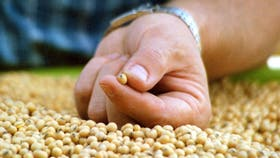 Sygenta designó presidentes para los rubros de semillas y de agroquímicos