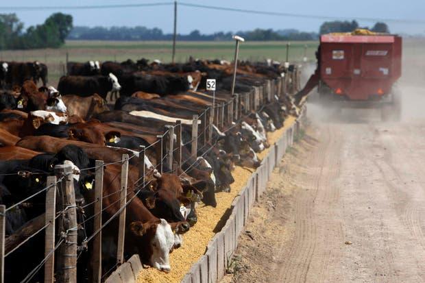 Se busca reducir el estrés de los animales que llegan al feedlot