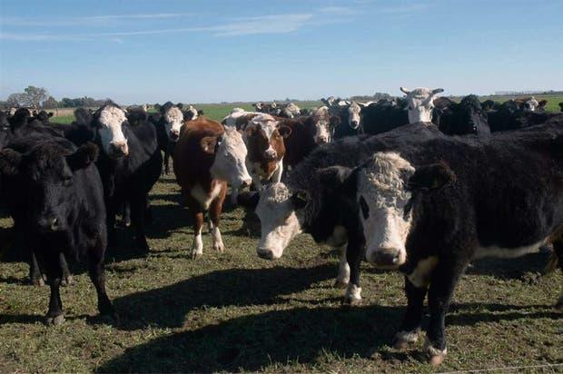 Un control eficaz de la parasitosis evita consecuencias comerciales adversas