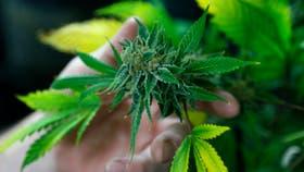 La Nación y las provincias desalentarán la tolerancia social a la marihuana