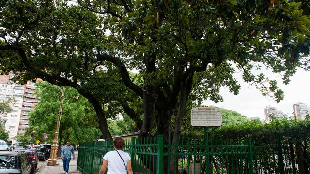 Magnolia de Avellaneda: provocó una insólita y agria disputa entre Domingo F. Sarmiento y el presidente Nicolás Avellaneda