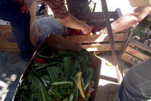 Las verduras que habitualmente encuentrar y recolectan los freeganos. Foto: Gentileza Analía Cincotta
