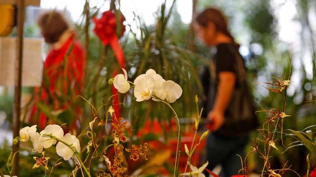 Alrededor del galpón donde antes funcionaba el Mercado de las Flores, en Almagro, perduran numerosos locales que resistieron el cierre del lugar en 2002. Foto: LA NACION / Ricardo Pristupluk
