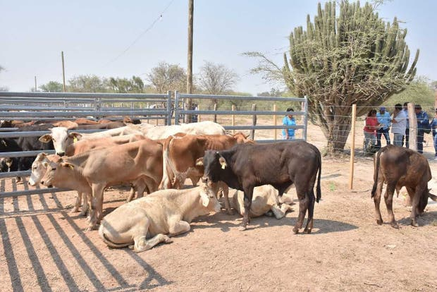 En la provincia se apoyó la compra de reproductores