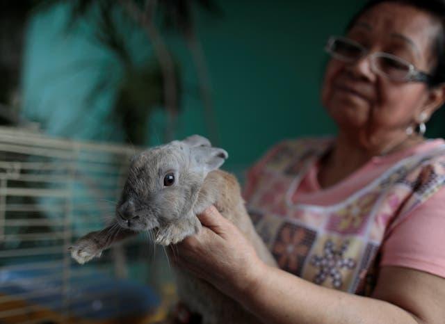 Lola, una de las conejas que distribuyó el gobierno