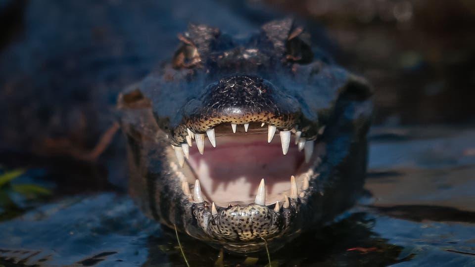 Es el primer acuífero de la Argentina y el segundo del mundo, detrás de Pantanal (Brasil). Cuenta con unas 60 lagunas y se nutre del agua de lluvia, no hay río que lo alimente. Foto: LA NACION / Diego Lima / Enviado especial