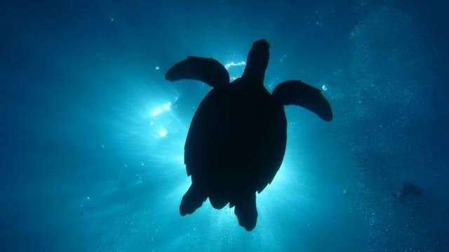 En algunas partes de Florida, el ciclo reproductivo de las tortugas dicta cuán brillante es la luz del alumbrado público