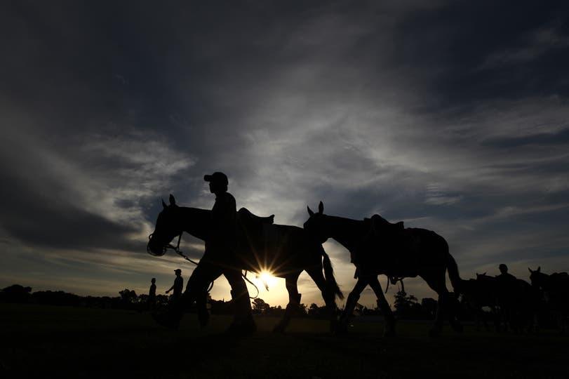 Cuidadores de caballos de polo, 5 de noviembre. Foto: LA NACION / Emiliano Lasalvia