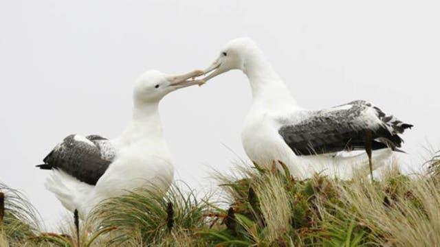 Los pájaros no son tan monógamos como se cree.