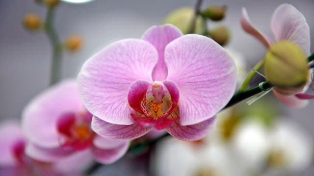 Los bares La Orquídea y Las Violetas, deben su nombre a las flores que encontraban en el barrio. Foto: LA NACION / Ricardo Pristupluk