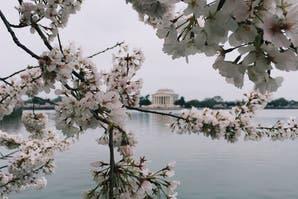 Washington: sentite en House of Cards