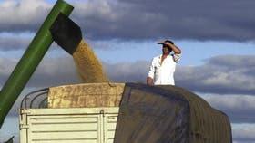 Más soja en la Argentina y Brasil
