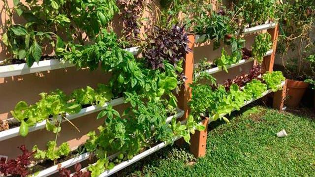 Cultivo hidropónico de hortalizas y plantas aromáticas