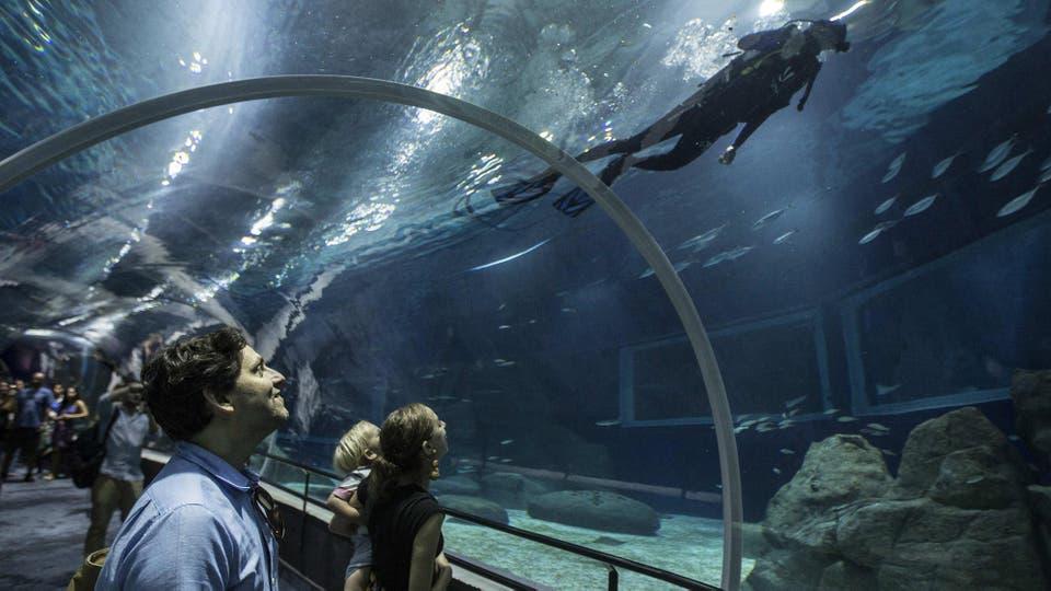 El tubo de 20 metros a través del enorme tanque oceánico, con tiburones y rayas, promete