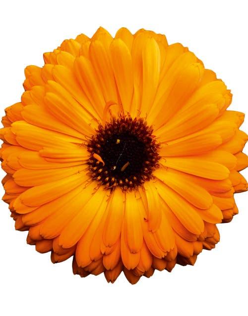 Es útil para muchos trastornos cutáneos, sarpullidos y quemaduras del sol..