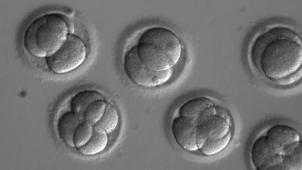 Embriones humanos crecen en un laboratorio durante unos días después de que los investigadores utilizaran tecnología de edición de genes para reparar con éxito una mutación genética causante de enfermedades del corazón