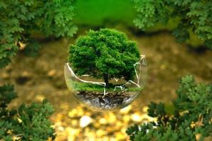 Cine ambiental: pelis ecológicas