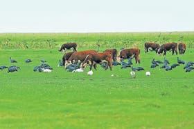 Se pueden lograr altos índices productivos en la ganadería pastoril