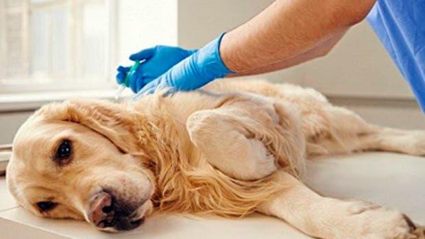 En Italia las mascotas son muy importantes y esta medida de una empresa lo demuestra