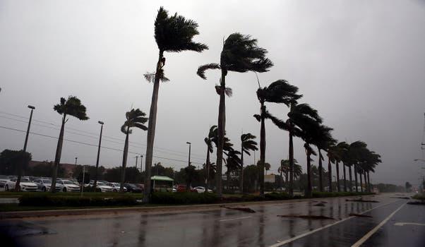El viento azotaba las palmeras de Boca Ratón, Florida. Foto: AFP