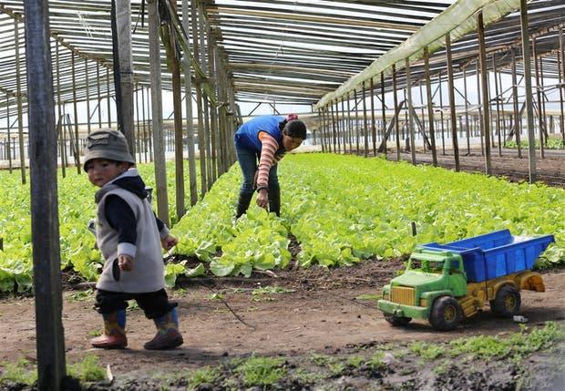 Aida Donayre trabajó en una quinta durante todo su embarazo y volvió a los 15 días; su hijo Horacio juega solo mientras ella hace sus tareas